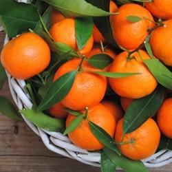 Orange Mandarin - Tpa -