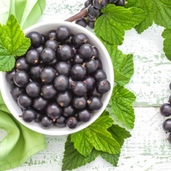 TPA - Black Currant