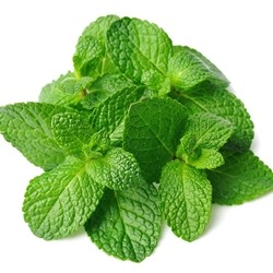 spearmint - tpa -