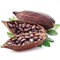 FA - cocoa