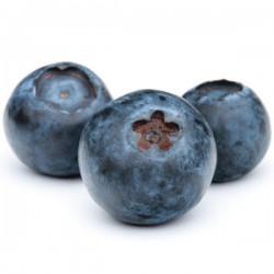 bilberry ( arandano) - Fa